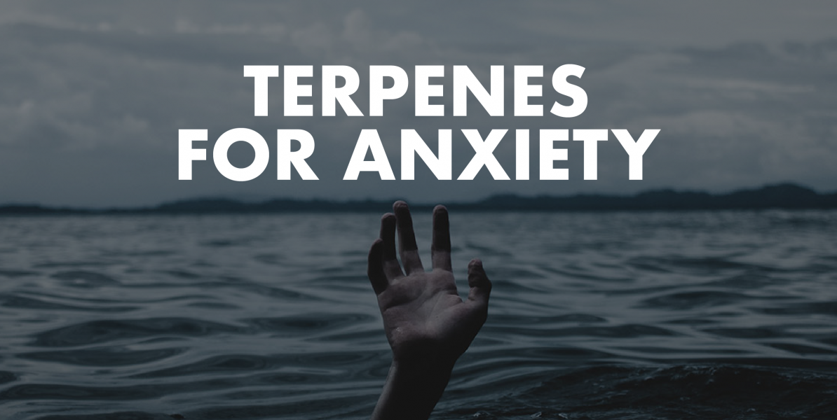 What You Need to Know About the Uses of Terpenes for Anxiety?